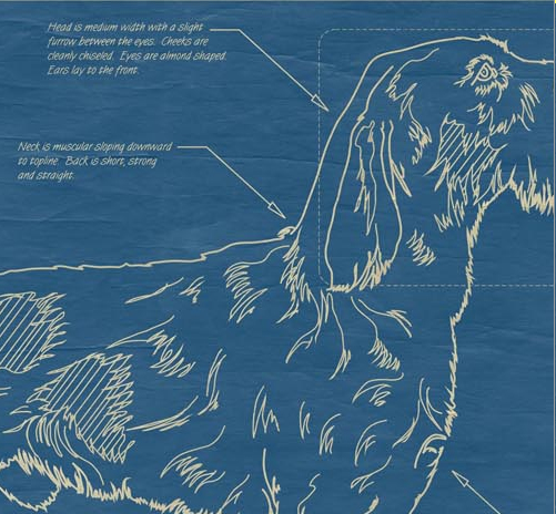 Ever wanted a blueprint of your dog or cat news circus posterus blueprint cat dog malvernweather Gallery