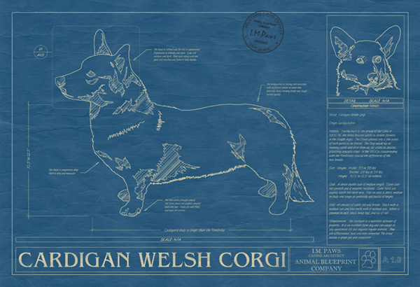 Ever wanted a blueprint of your dog or cat news circus posterus the blueprints feature factual information that is specific to that breed like the muscular shoulders of a bulldog to the fox like head of a corgi malvernweather Image collections