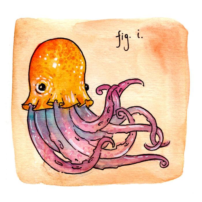 44.figi_clowncephalopod